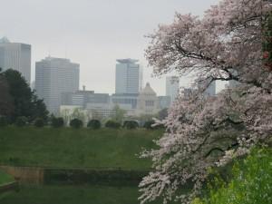 千鳥ヶ淵(桜と国会)